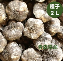 青森県産種子用にんにく2Lサイズ1kg