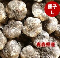 青森県産種子用にんにくLサイズ1kg