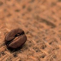 コーヒー豆に鎮痛作用がある?