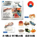 カミオジャパン ビジュアルコレクション大人の図鑑シールフレーク 深海魚編 08116