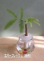 ミニ観葉植物新作エバーフレッシュ