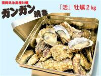 【活牡蠣】カンカン焼きセット牡蠣2kg糸島産活牡蠣かき殻付き調理用缶付き【水産物応援商品】