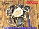 半額 糸島サウンド 特大サイズ 10個(合計4kg以上)産地直送 生食用 お刺身 ギフト 贈り物  糸島産 岩牡蠣 岩かき 牡蠣 かき 【送料無料】   通常価格11,000円     ↓