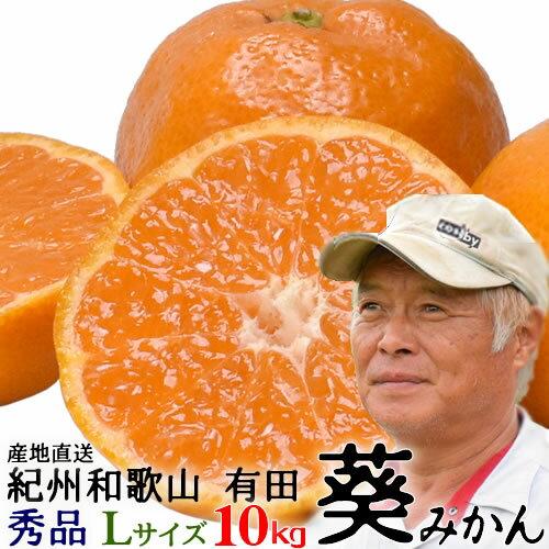 フルーツ・果物, みかん 5 921()9:00923()1:59 10kgL MA-7