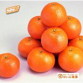 興居島伊予柑約10kg【贈答用】【送料無料】【いよかん】
