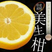 【化粧箱】愛媛県産美生柑(みしょうかん)9〜15玉(2.5kg程度)【贈答用・送料無料】
