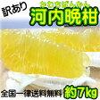 【訳あり】/愛媛県産 河内晩柑 約7kg/(美生柑・宇和ゴールド) 【送料無料】和製グレープフルーツ