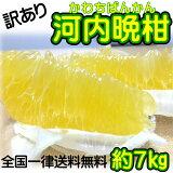 【訳あり】愛媛県産 河内晩柑 約7kg(美生柑・宇和ゴールド) 【送料無料】和製グレープフルーツ