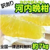 【訳あり】/愛媛県産河内晩柑約7kg/(美生柑・宇和ゴールド)【送料無料】和製グレープフルーツ