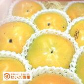 【化粧箱】愛媛県産太秋柿約2.5kg【送料無料】ギフト