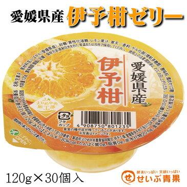 愛媛県産 伊予柑ゼリー 30個入【いよかん】ゼリー Jelly