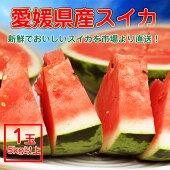愛媛県産すいかスイカ1玉(4kg以上)【2玉ご購入で送料無料】