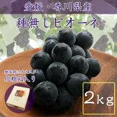 【化粧箱】種なしピオーネ(2kg以上)【チルド送料無料】
