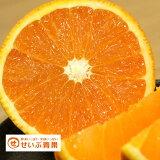 【訳あり】/愛媛県産 清見タンゴール 約10kg/(清見オレンジ)
