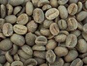 コーヒー コロンビア オーガニック