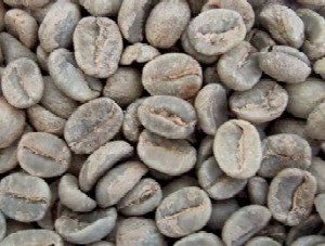 コーヒー生豆 有機栽培グァテマラ 1kg(オーガニック)【jo_62】 【】