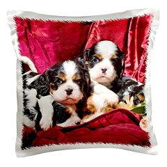 【Danita Delimont 犬 Cavalier King Charles Spaniel Puppy Dogs us05 zmu0119 Zandria Muench Beraldo 枕ケース 16x16 inch Pillow Case pc_88800_1】 b016ck7ym8[生活総合倉庫 楽天市場店]