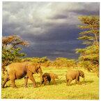 【Danita Delimont 象 African Elephant Herd、セレンゲティ国立公園、tanzania-af45 aje0223 アダム・ジョーンズ コースター set-of-8-Ceramic cst_71689_4】 b00jslrrmg