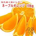 ネーブルオレンジ10kg 訳あり みため×おいしさ◎ 愛媛県