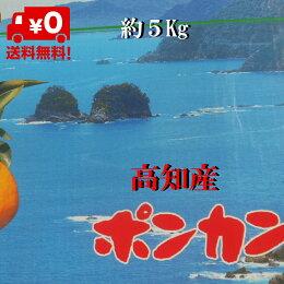 【送料無料】高知産ポンカン約5Kg贈答用赤秀品化粧箱入りサイズL〜2Lただし北海道沖縄は送料500円のご負担お願いします。1月より順次発送いたします。