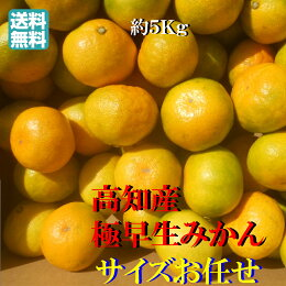 【送料無料】高知産極早生みかん約5kgサイズお任せただし北海道沖縄送料500円のご負担お願いします。