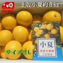 【送料無料】高知産訳あり小夏 2L 5Kg 日向夏 ニューサマーオレンジ ただし北海道沖縄は800円(100サイズまで)のご負担お願いします。