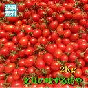 【送料無料】高知産ミニトマト約2Kgただし北海道沖縄は送料600円のご負担お願いします。