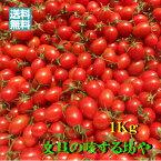 【送料無料】高知産ミニトマト 約 1Kg ただし北海道沖縄は送料600円のご負担お願いします。