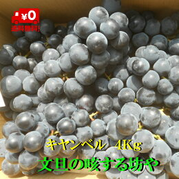 【送料無料】高知産ぶどうキャンベル約4Kgただし北海道沖縄は送料500円のご負担お願いします。