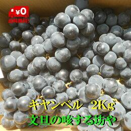 【送料無料】高知産ぶどうキャンベル約2Kgただし北海道沖縄は送料500円のご負担お願いします。