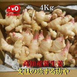 【送料無料】高知産新生姜家庭用約4Kgただし北海道沖縄は送料500円のご負担お願いします。