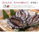 ギフト【送料無料】兵庫県 津居山港産 天然 活あわび 約1kg(3から7個)アワビ 鮑 送料無料 日本海 3