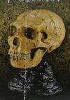 【未開封】生命進化立体図録 ネアンデルタール人(頭骨) 会場限定オリジナルカプセルフィギュア【中古】