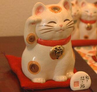 In the 福々 cat