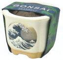 植木鉢と種がセットになった黒松栽培セット波富士