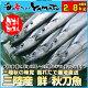 三陸産 鮮 秋刀魚 1尾140g以上保証 総重量2.8kg(18〜20尾入が目安となります…