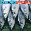 三陸産 鮮 秋刀魚 1尾120g前後 総重量2kg(17尾前後入が目安となります) 食べ方ガ...
