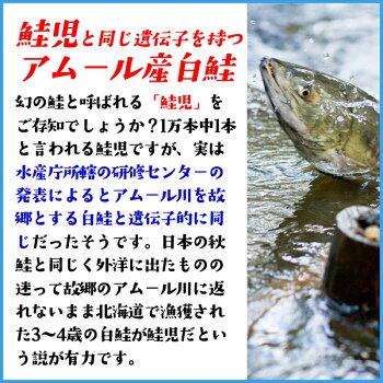 秋鮭骨取り切り身100g前後×5枚鮭さけサケ魚骨とり骨取り
