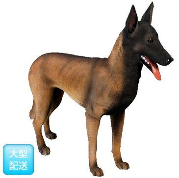 ベルギー犬/Belgian Malinois【CARUNA】