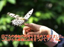 韓国料理の四賀赤とんぼで買える「ありがとうカード 少女と蝶 【RCP】 ギフト お取り寄せ グルメ 内祝い プレゼント」の画像です。価格は10円になります。