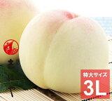 【送料無料】 水蜜桃 ≪特大3Lサイズ≫ 岡山 白桃 大玉 お中元 ギフト お供 お取り寄せ
