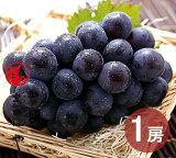 ピオーネ 1房 500g (9月2日〜9月20日出荷分) 岡山 ぶどう 種なし ニューピオーネ ギフト