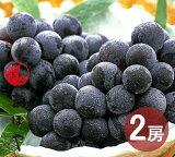 ピオーネ 2房 1kg (6月15日〜8月31日出荷分) 岡山 ぶどう 種なし ニューピオーネ ギフト