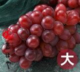 紫苑(しえん)特大サイズ【種無しで食べやすくて甘い高級冬ぶどう】