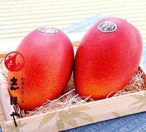 完熟マンゴー (太陽のタマゴ) 2Lサイズ お祝 内祝 お返し お取り寄せ お中元 ギフト
