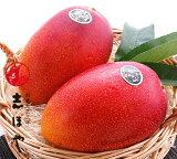 完熟マンゴー(太陽のタマゴ) 大玉 3Lサイズ お祝 内祝 お返し お取り寄せ ギフト