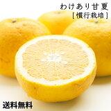 [わけあり]甘夏柑10kg【TYPE-A】