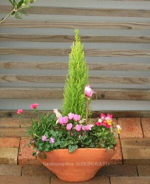 【桃色コンテナ】女の子の大好きなピンクで統一したとびっきり可愛い寄せ植え[Mサイズ]【楽ギフ_包装】【楽ギフ_メッセ】