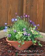 ブルー・パープル系の花で統一したコンテナガーデン