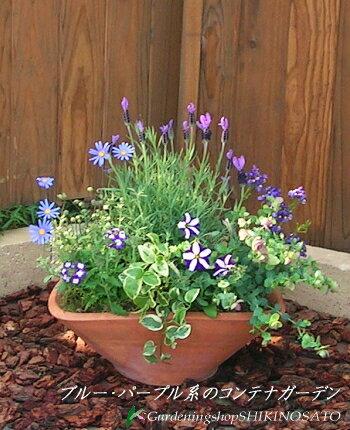 一味ちがったテイストのコンテナガーデンブルー・パープル系の花で統一したコンテ...